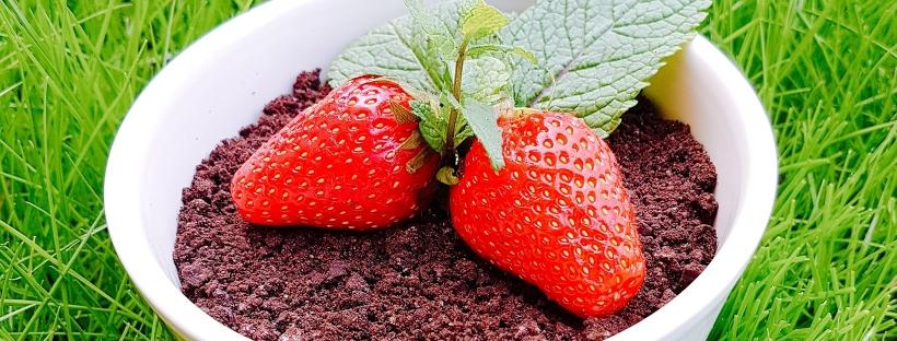 mousse, chocolat, chocolat noir, fraise, fruits rouges, fruit d'été, dessert, dessert original, oreo, menthe, sucré, fondant, fait maison, homemade